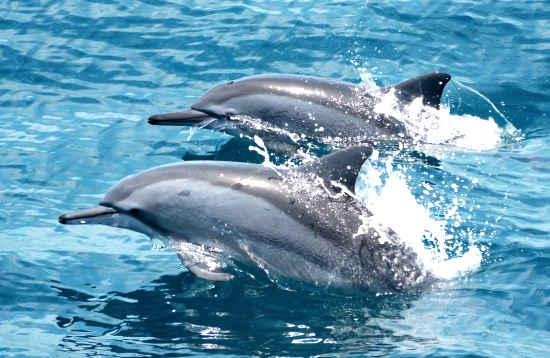 Mini Tour de Delfines Puerto del Carmen Lanzarote