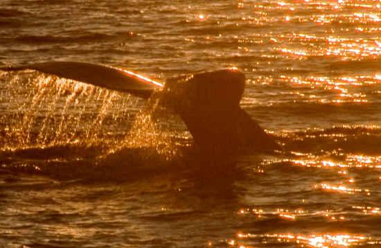 Paseo en Barco Delfines & Atardecer Lanzarote